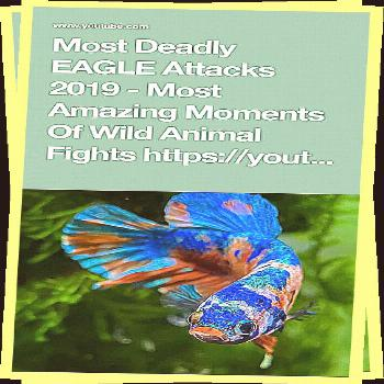 Most Deadly EAGLE Attacks 2019 - Most Amazing Moments Of Wild Animal Fights Most Deadly EAGLE Attac